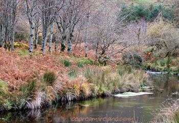 Glenteenasig Woods