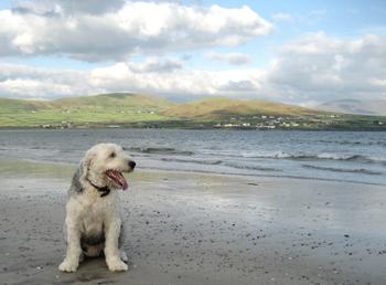 Ivan on Beach