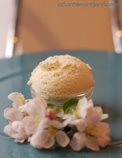 Manuka Honey and Orange Blossom Ice Cream