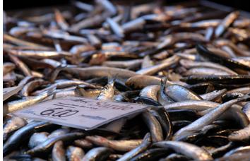 Sardines in Rialto market